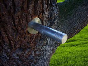 Goujon d'encrage dans un arbre - Clou SVA