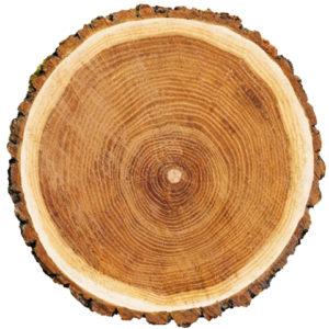 Tronc d'arbre en coupe - circulation e la sève