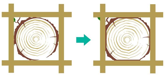 Phénomène d'écrasement du tronc par le système traditionnel de fixation de plateforme en accrobranche