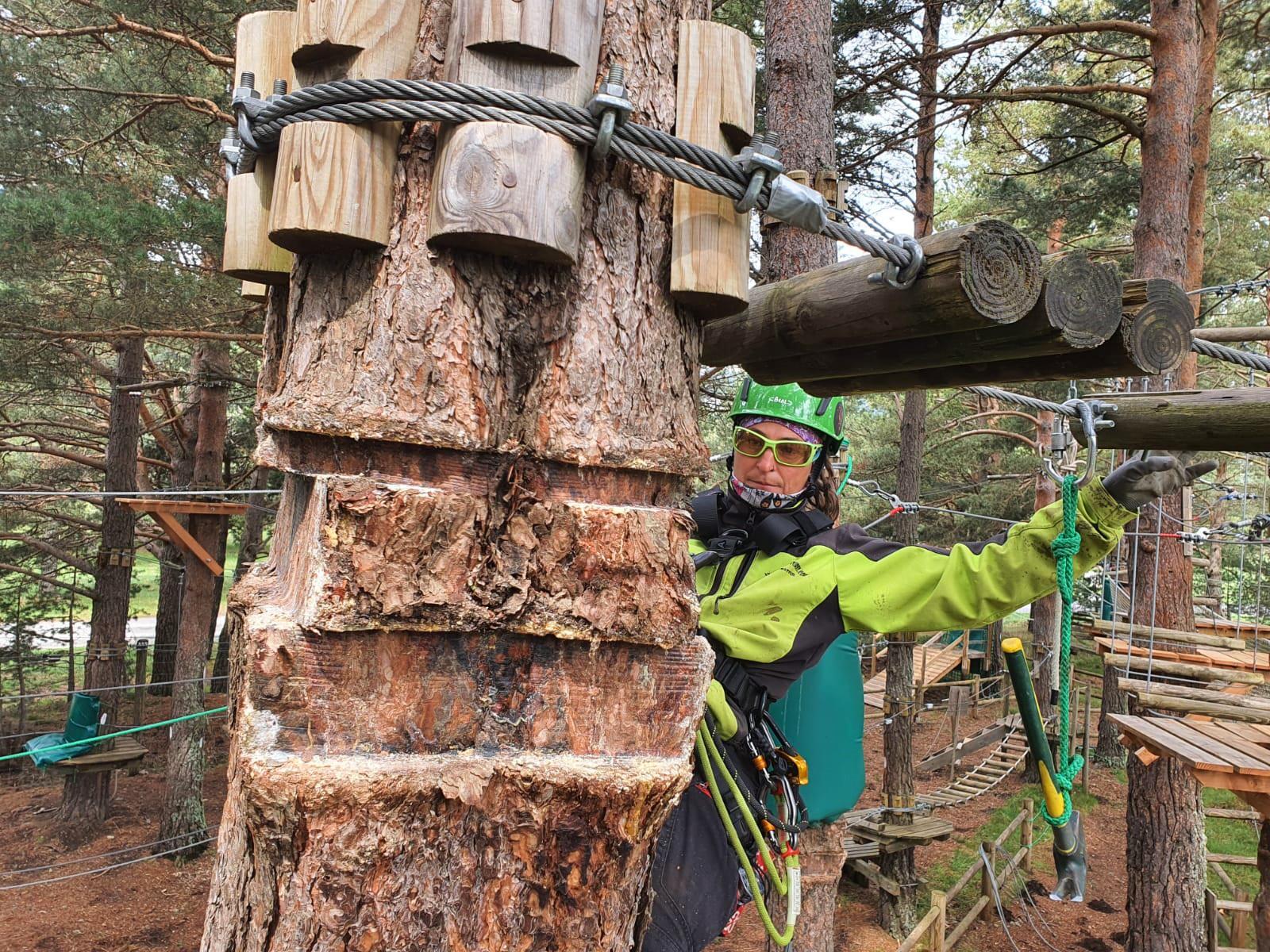 Tronc d'arbre abimé par une plateforme dans un parc accrobranche